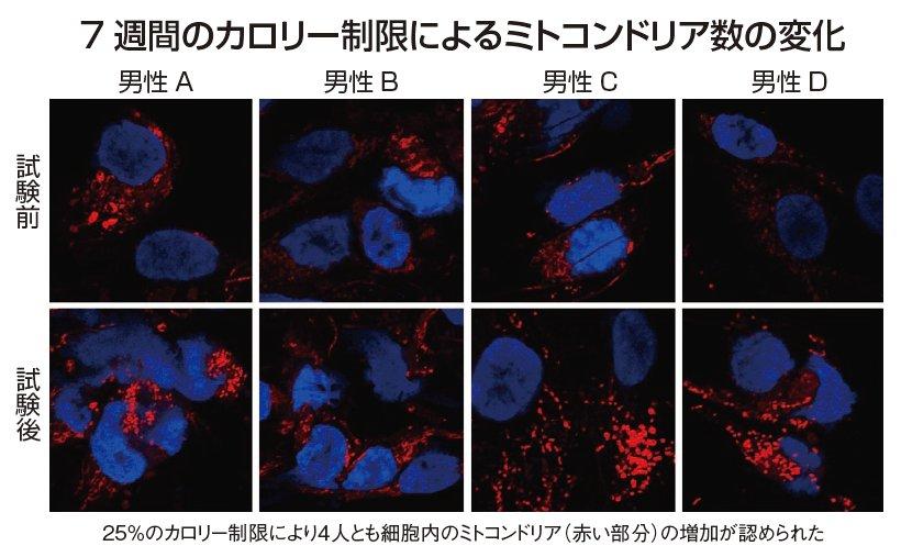 mitokondoria1.jpg